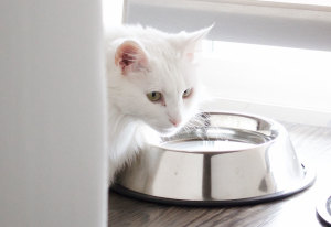 How to Tell if Your Cat is Dehydrated
