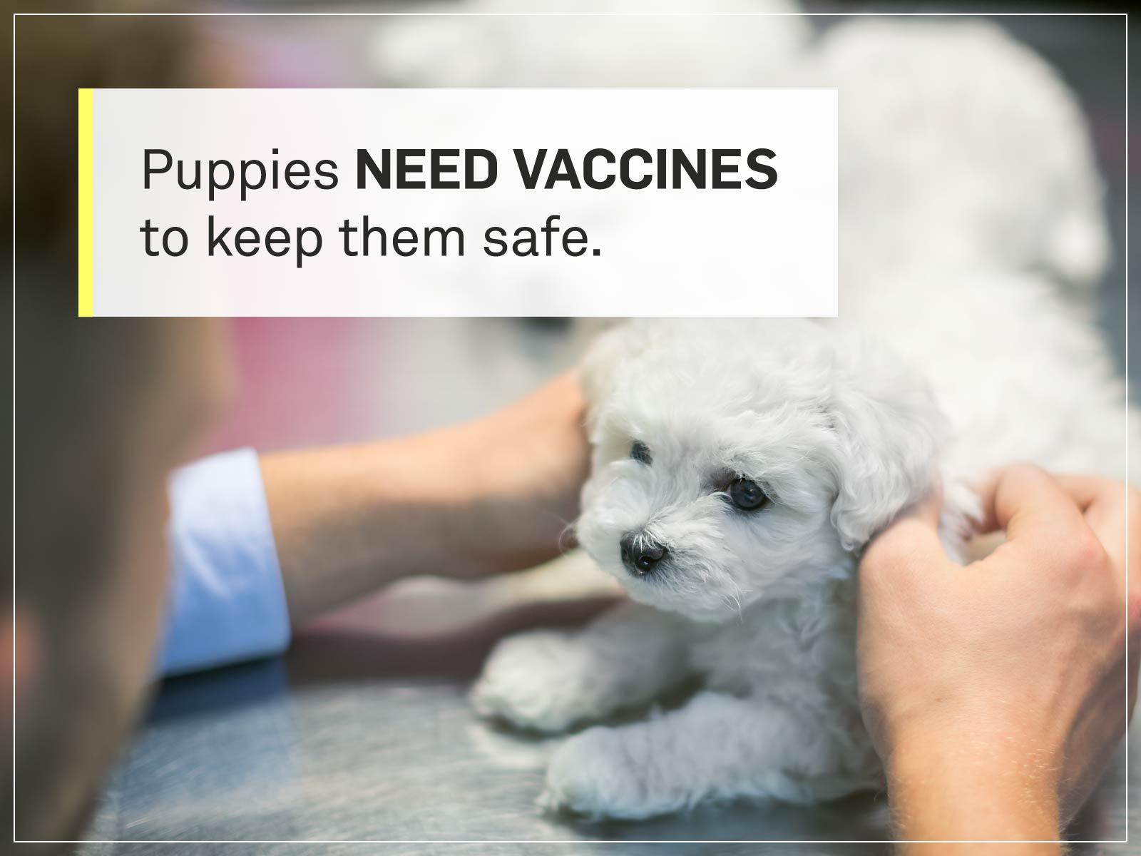 new puppy checklist 3-doctor-vaccines