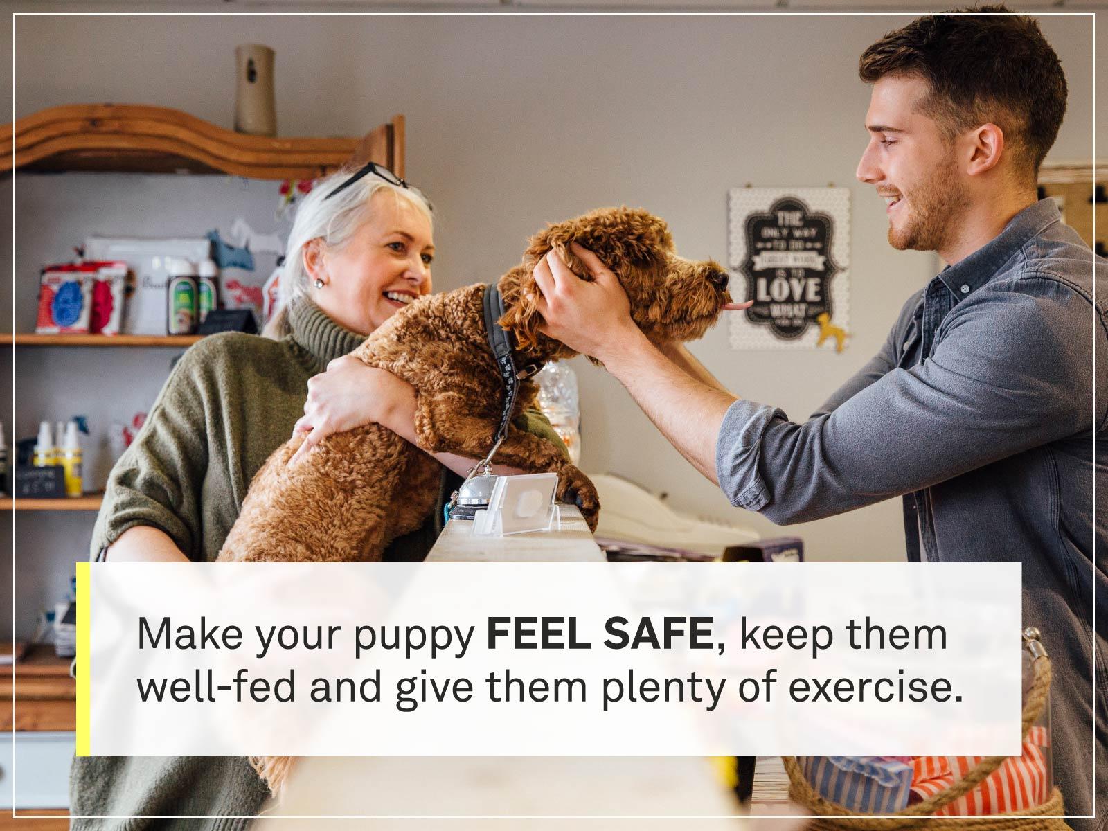 new puppy checklist 1-pet-store
