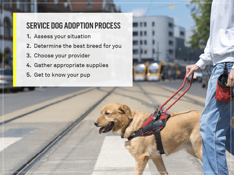 the process for getting a service dog