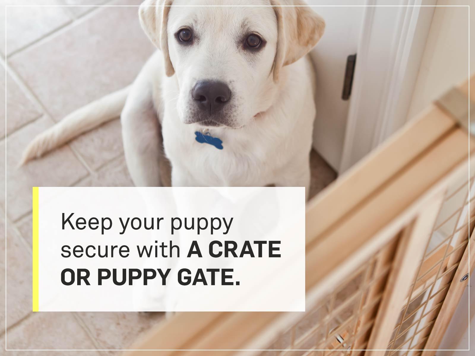 new puppy checklist 9-pet-gate