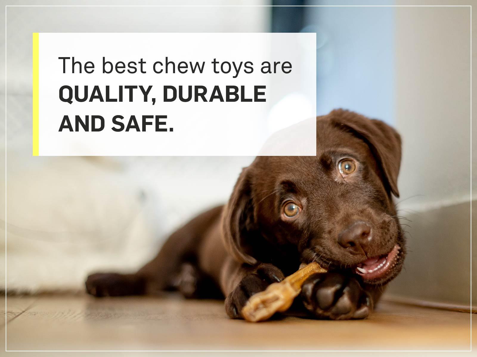 new puppy checklist 12-chew-toy