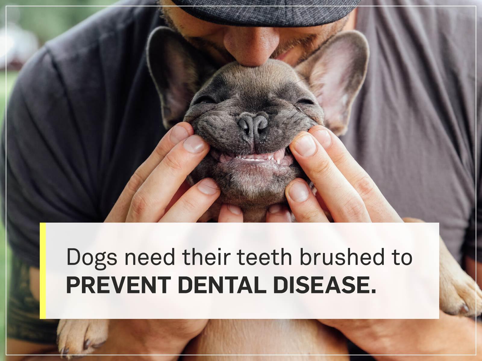 new puppy checklist 6-teeth