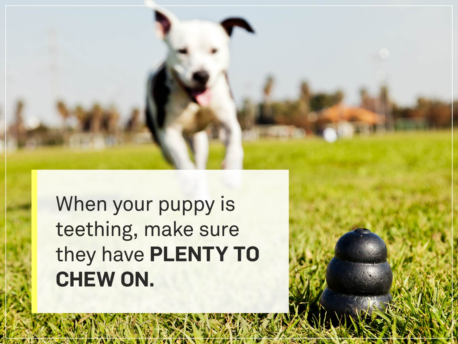 new puppy checklist 13-kong-toy