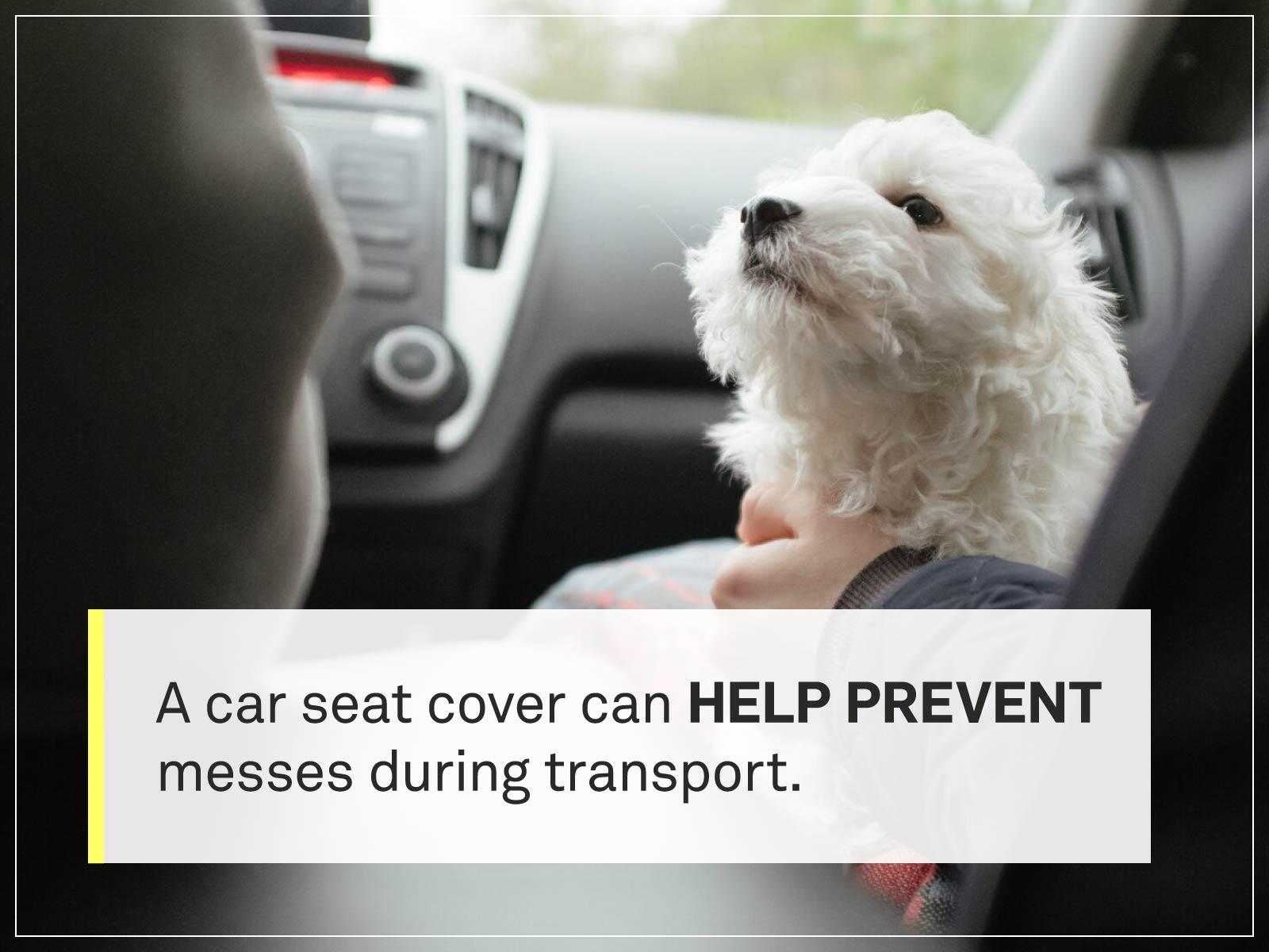 new puppy checklist 11-puppy-car