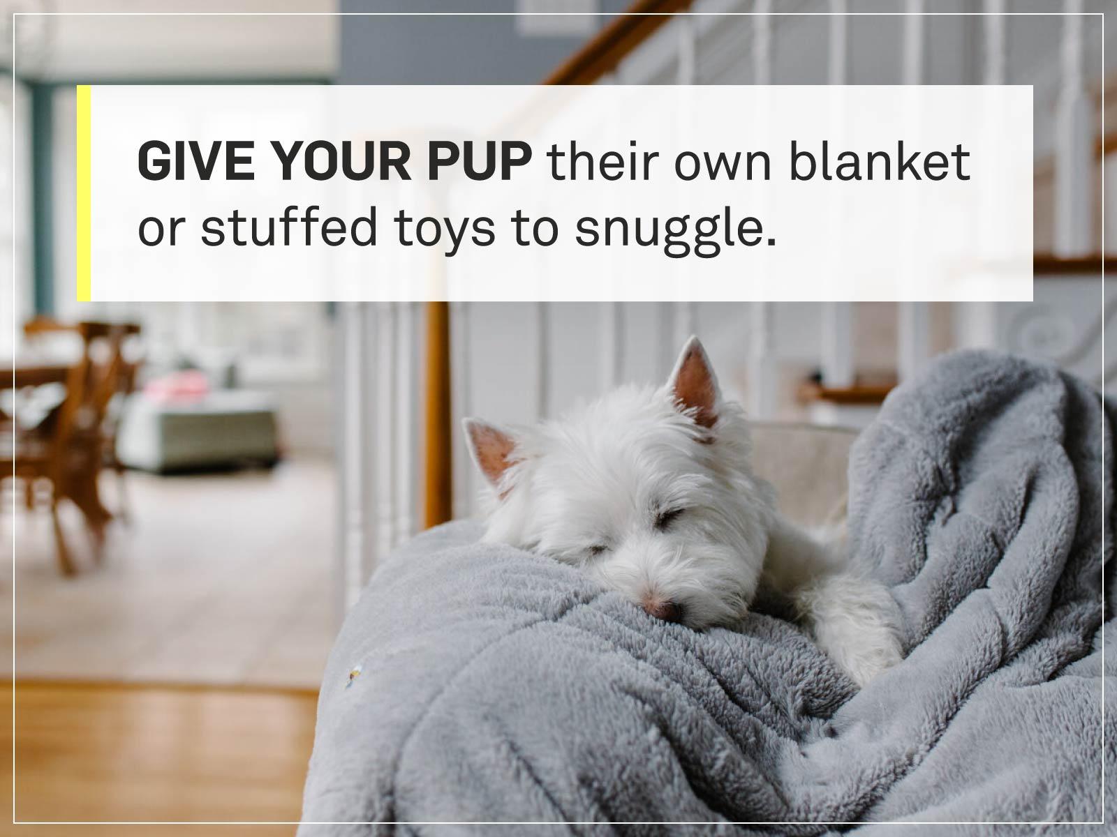new puppy checklist 10-puppy-snuggle-blanket