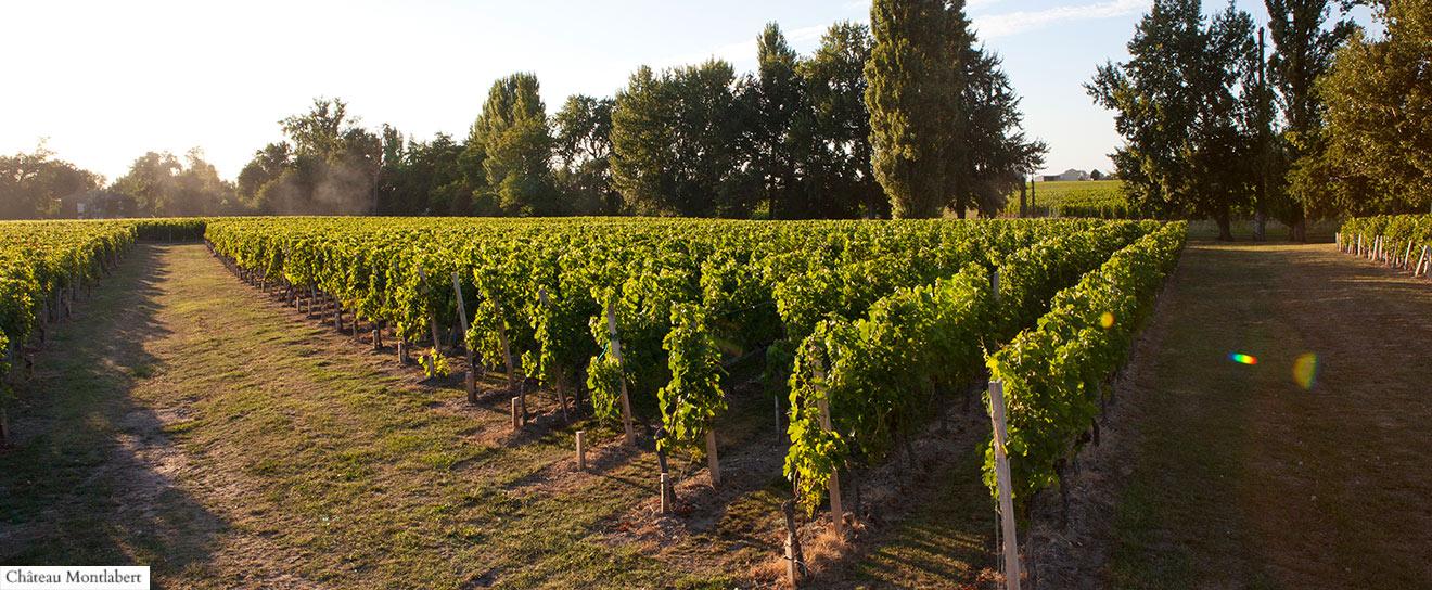 Vignes Montlabert