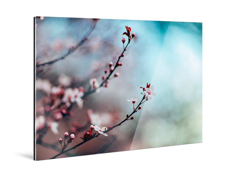 Acrylic Photo Print | Product Full View