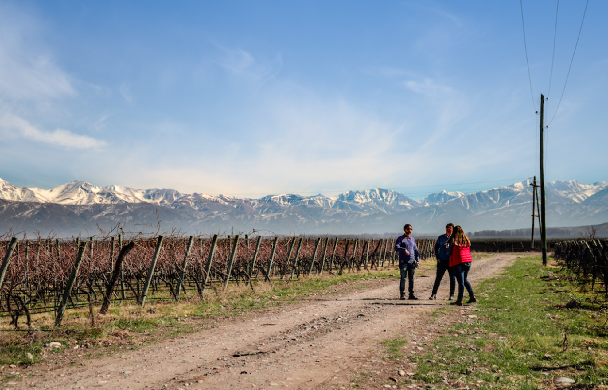Landscape view of grape vine rows and people gathered with a mountain range background.