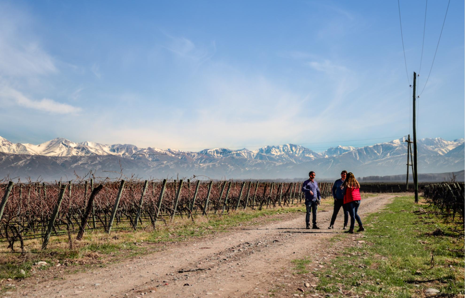 Vue d'un paysage de rangées de vignes et d'un groupe de personnes avec en arrière-plan une chaîne de montagnes.