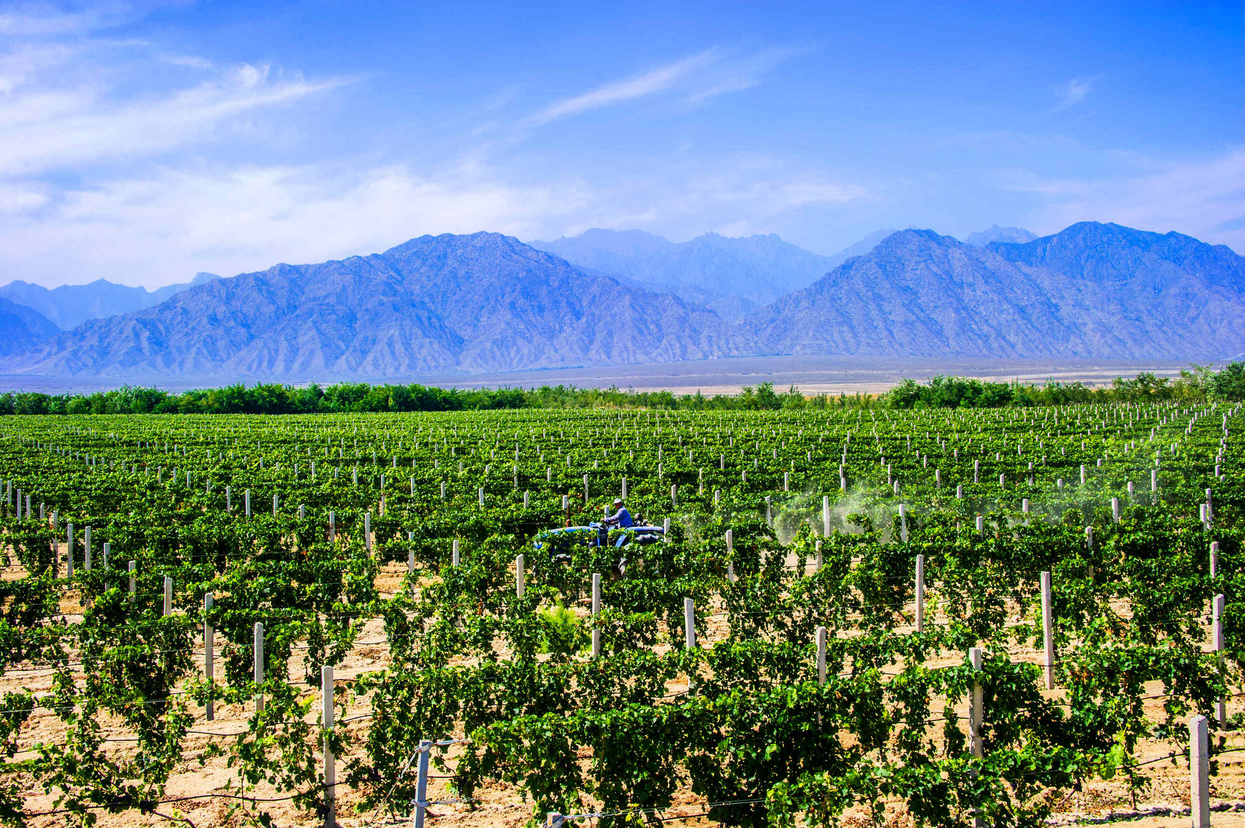 Ningxia wine region Himalayas