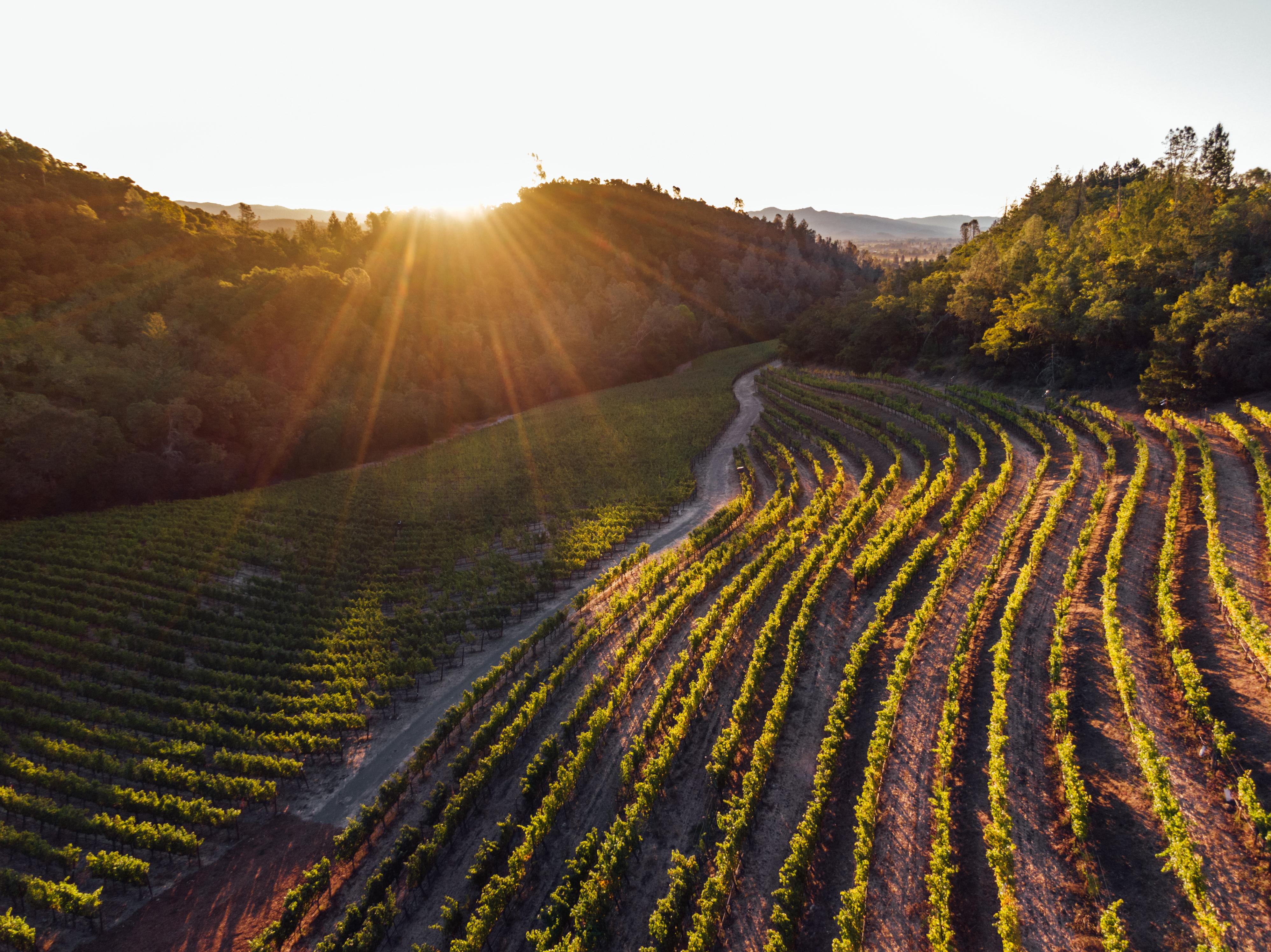 Blog-Coravin Taste of Harvest Blog #3