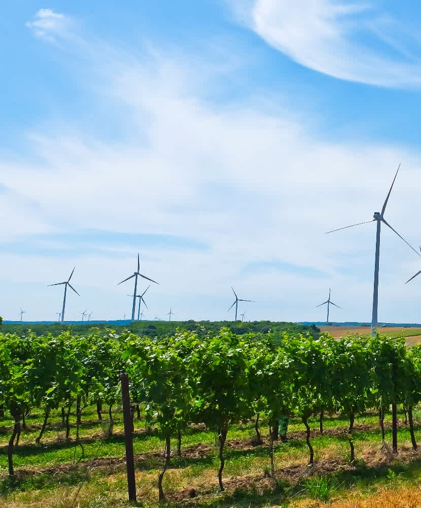 Sustainability in the Wine World