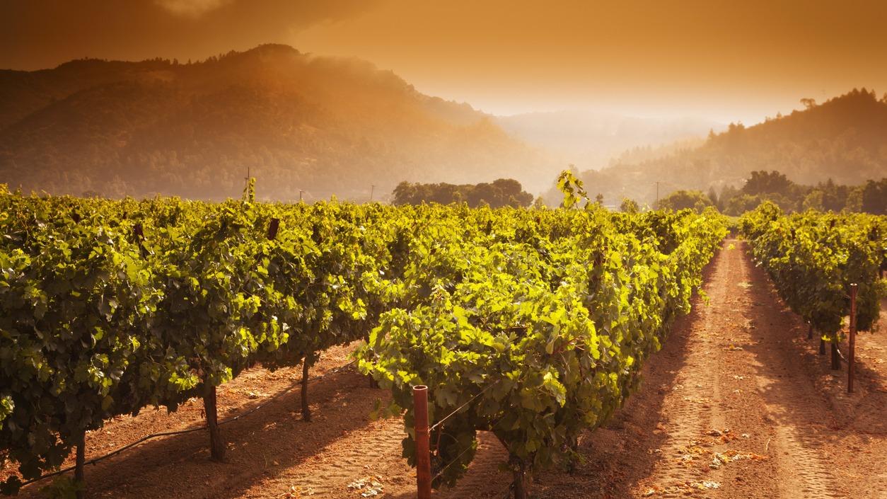 image of napa winery