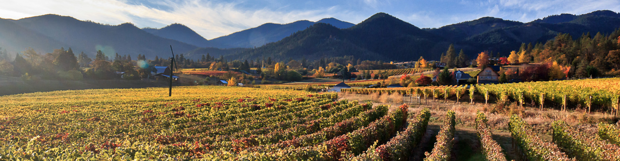 Landscape of Willamette Valley's vineyard and mountains.
