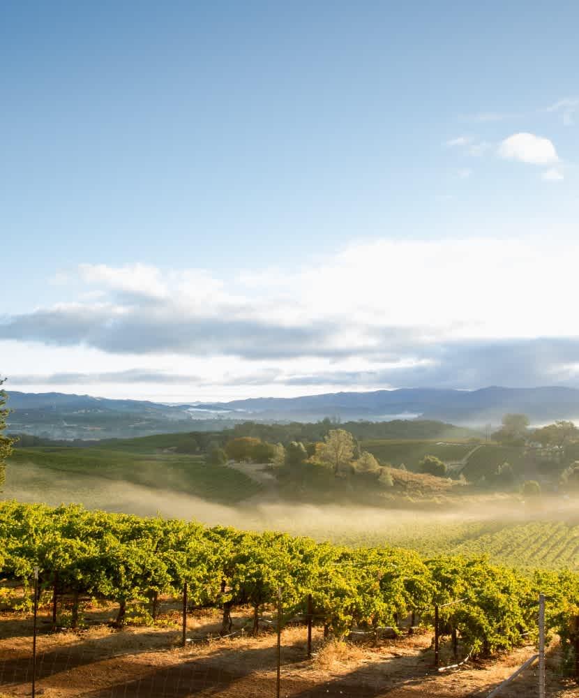Anderson Valley Wines