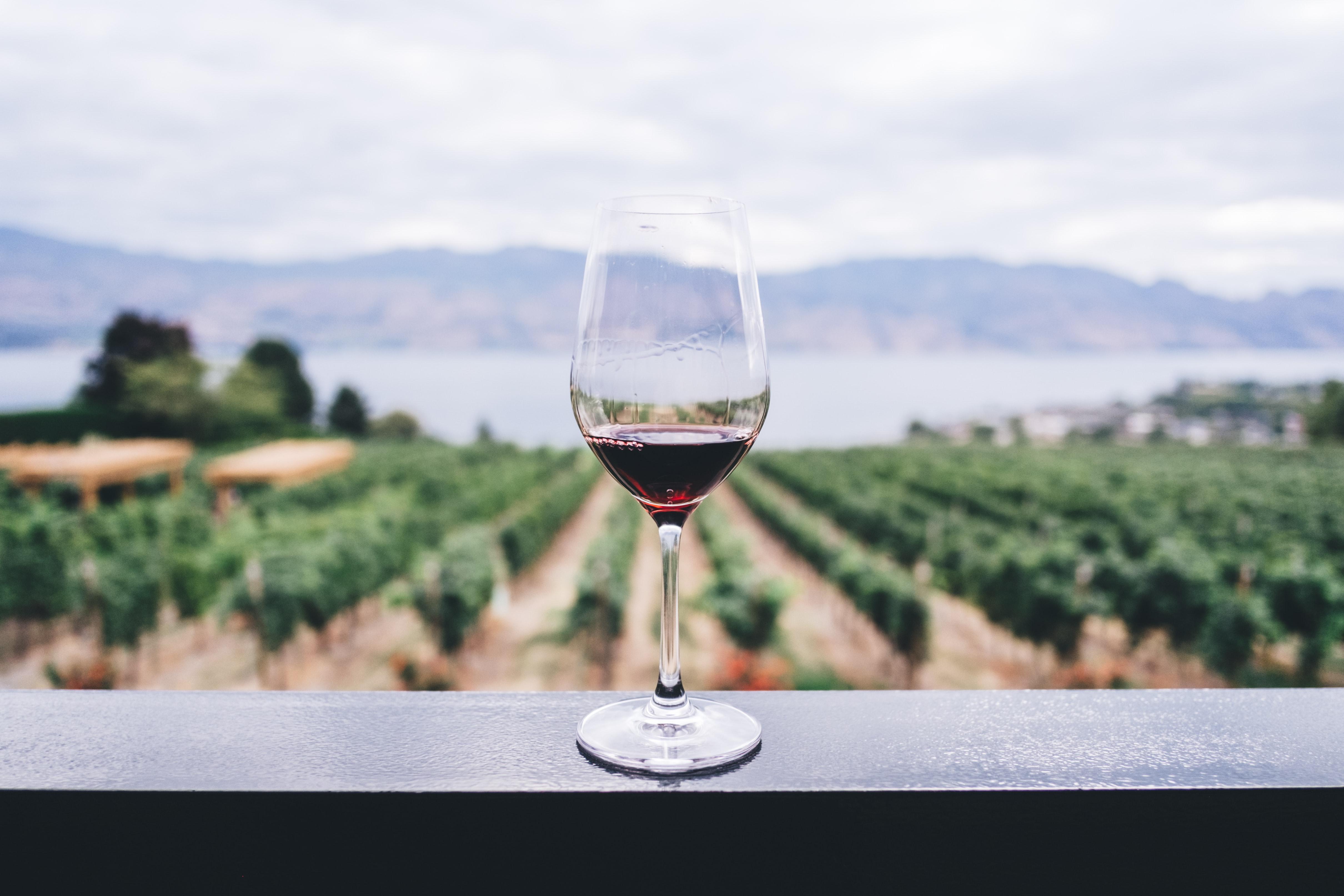 pinot noir winery image https://unsplash.com/photos/aF1NPSnDQLw
