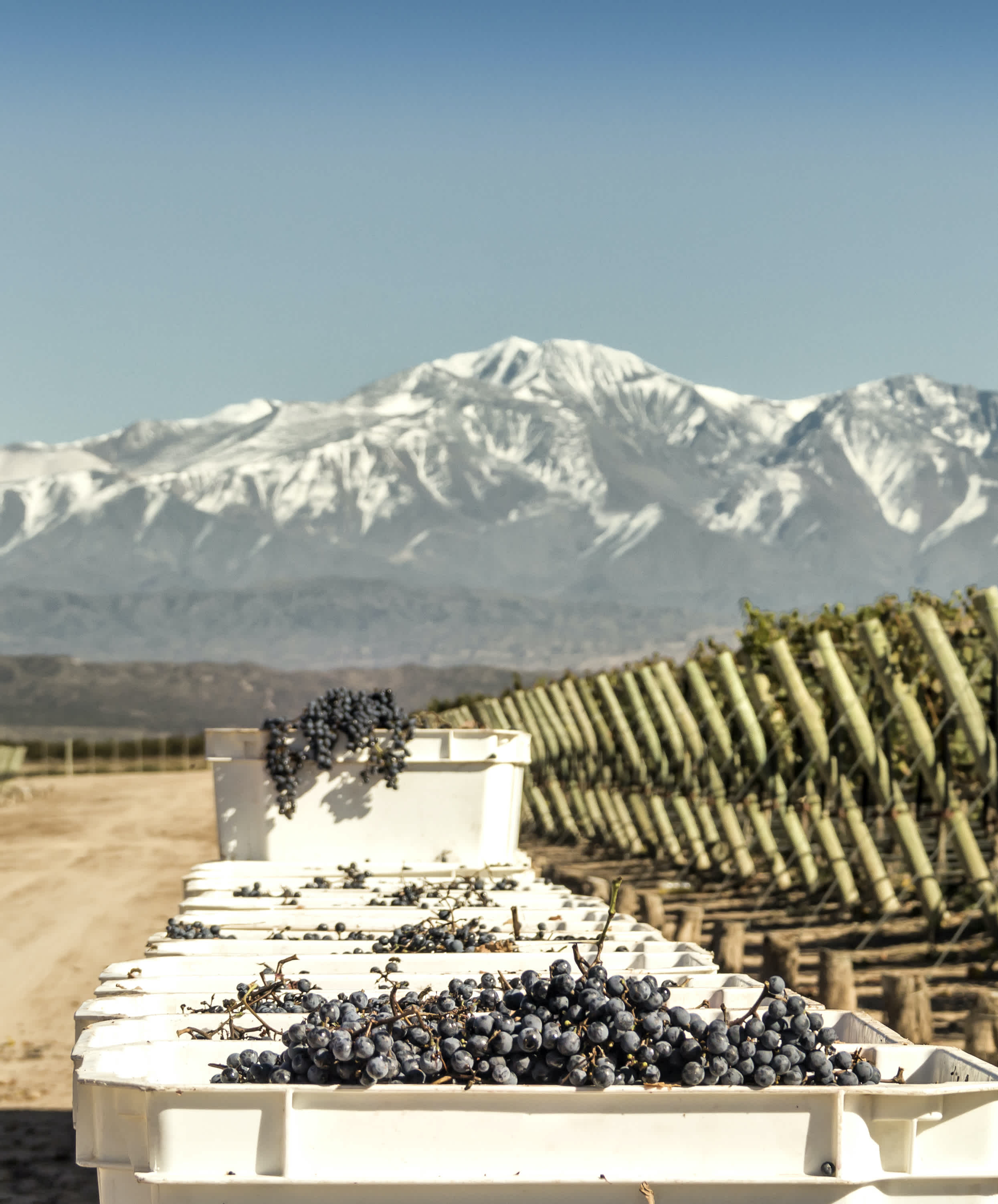 What is Malbec: Wine Description and Pairings