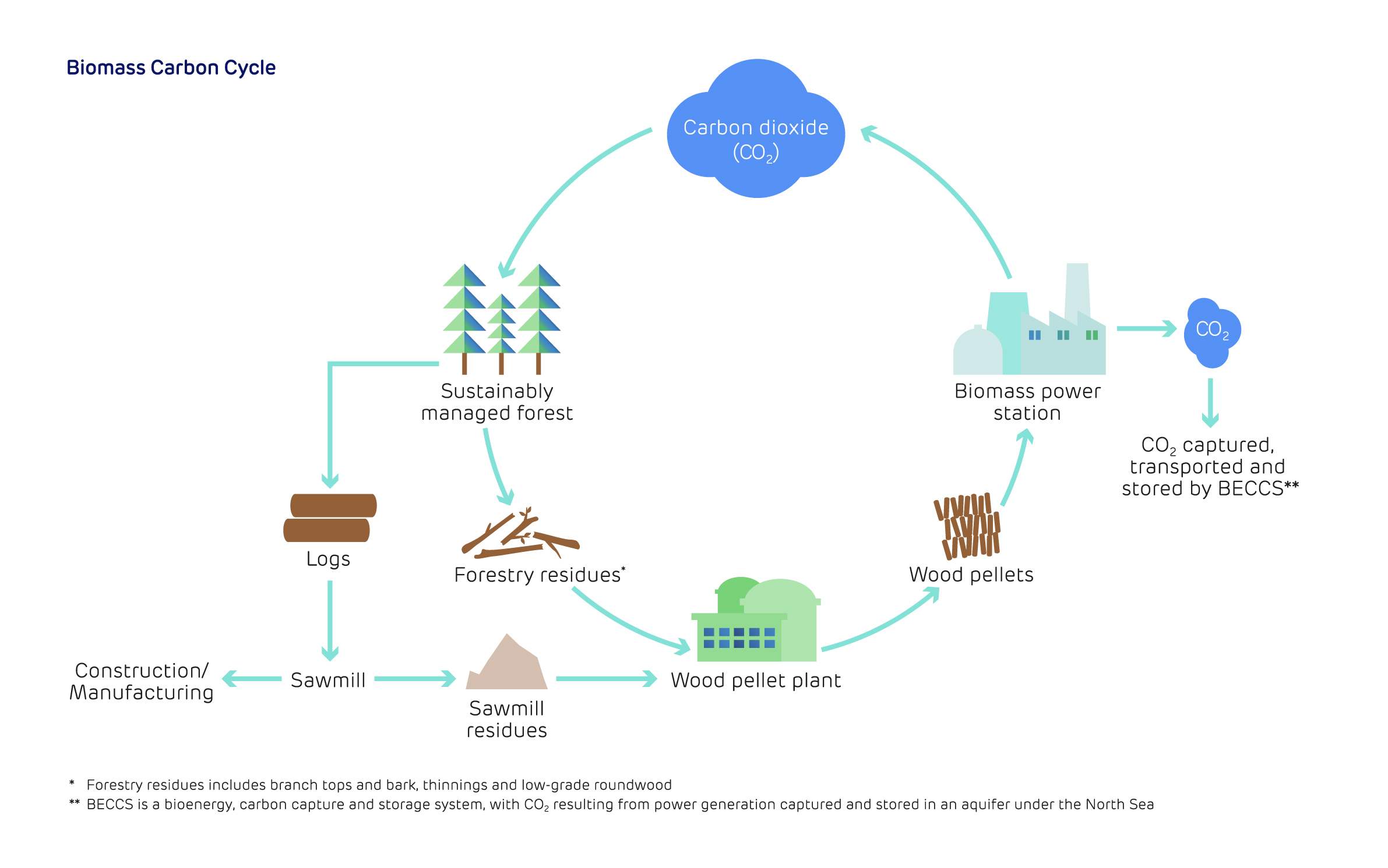 Biomass: The renewable energy source supporting the zero-carbon transition - Biomass Carbon Cycle Image
