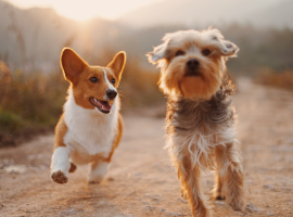 What Cleaning Products are Safe for Dogs?