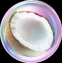 Cleancult Bubble