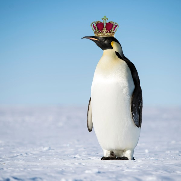 Emperor Penguin with Crown