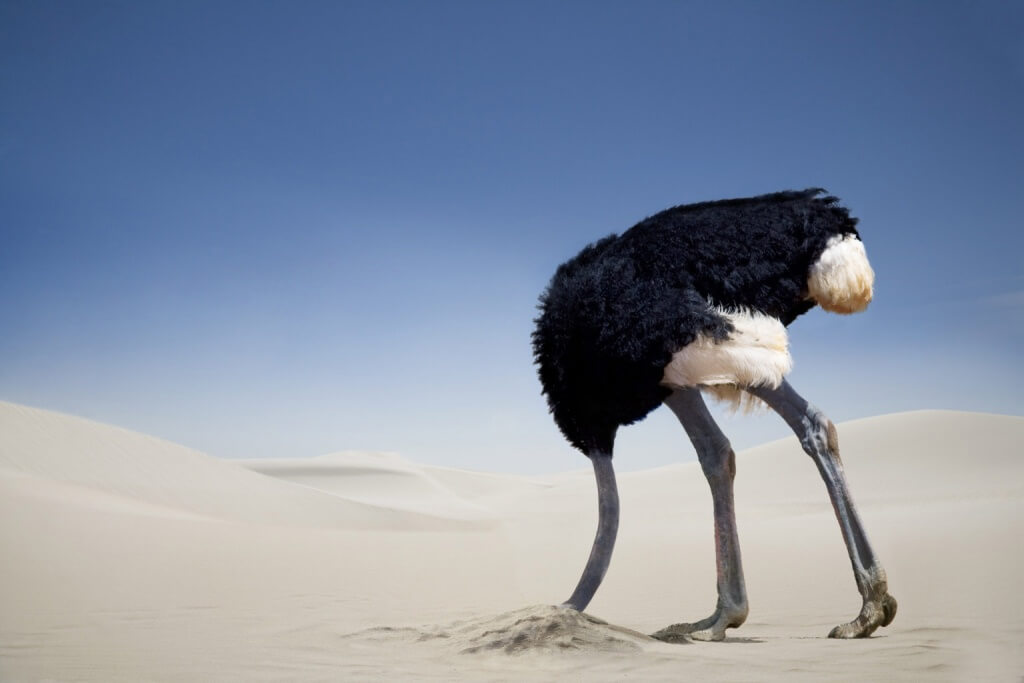 Ostrich head in the sand