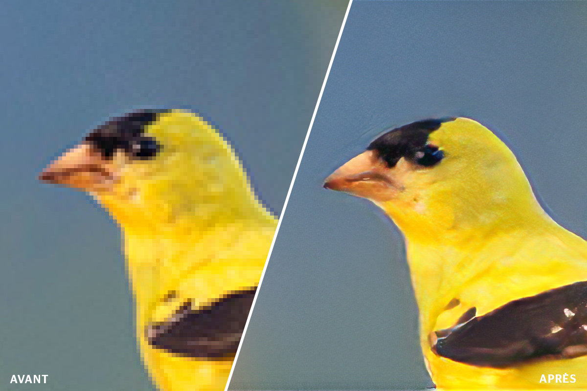 featured nieuwe-features-adobe-photoshop super-zoom FR