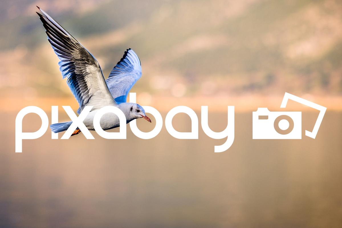 https://images.ctfassets.net/zar1ypr5qpcx/MJ6KoFVlaS2840K8IQecw/17c152e78e7e311031745f74572566a4/322-5xgratisfotos-featured-pixabay.jpg