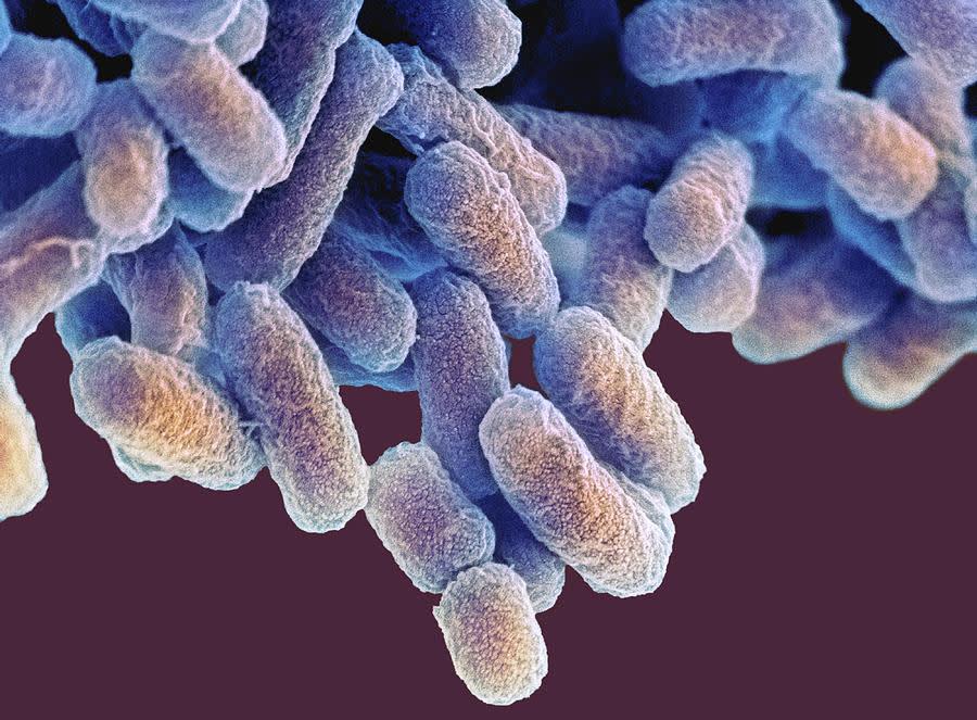 Eccentric energy bacteria