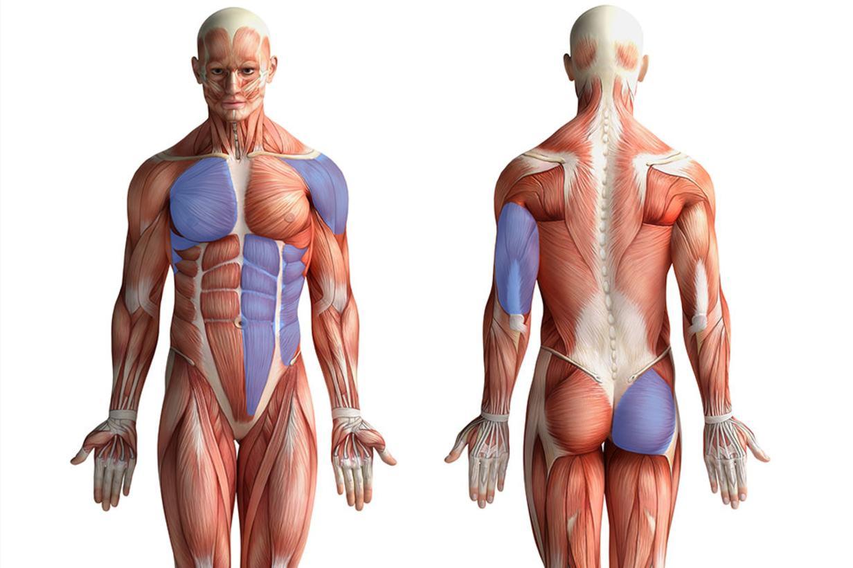 Pushups: Weit mehr als nur Training für die Brustmuskulatur
