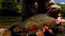 Tongariro Lodge Guided Trout Fishing