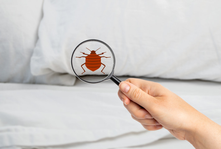 Are Bed Bugs Covered by Homeowners Insurance?