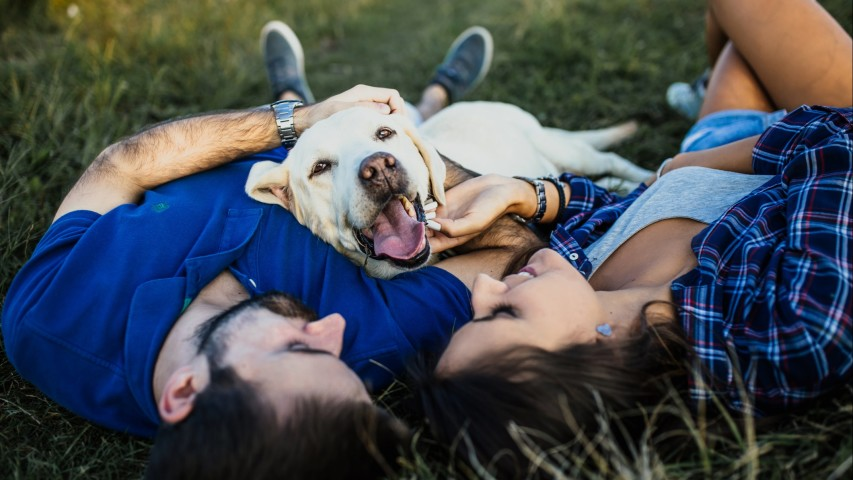 Pet Insurance For Dogs: Is It Worth It?