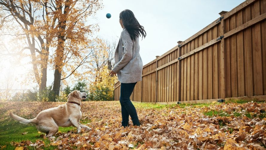 Tips For Saving Money On Pet Care