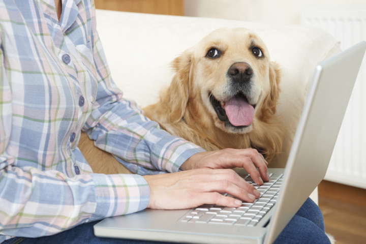 Ways to Save Money on Pet Insurance