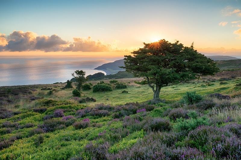 Devon-Countrysidex800px