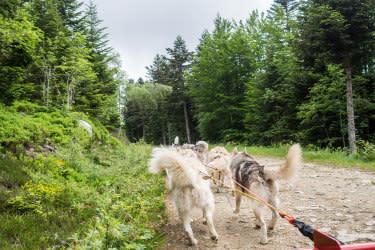 Roadtrip durch Frankreichs Osten Hundeschlittenfahrt © Out of Office