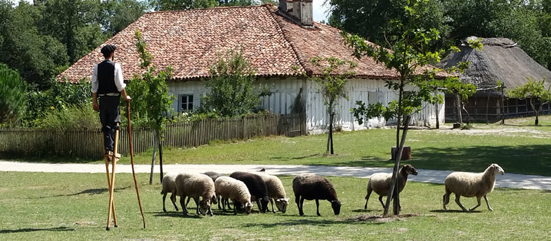 Marquèze, all aboard for a day trip to a 19th century airial community in the Landes