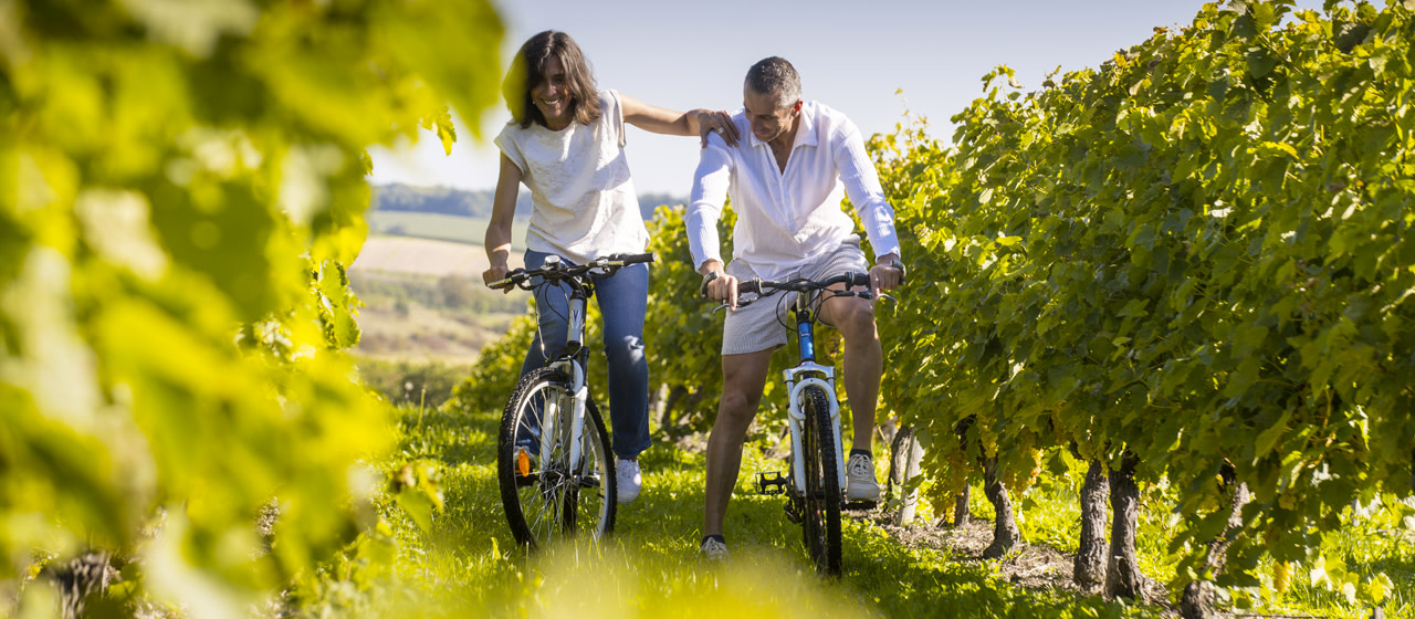 Bicycle ride in vineyards