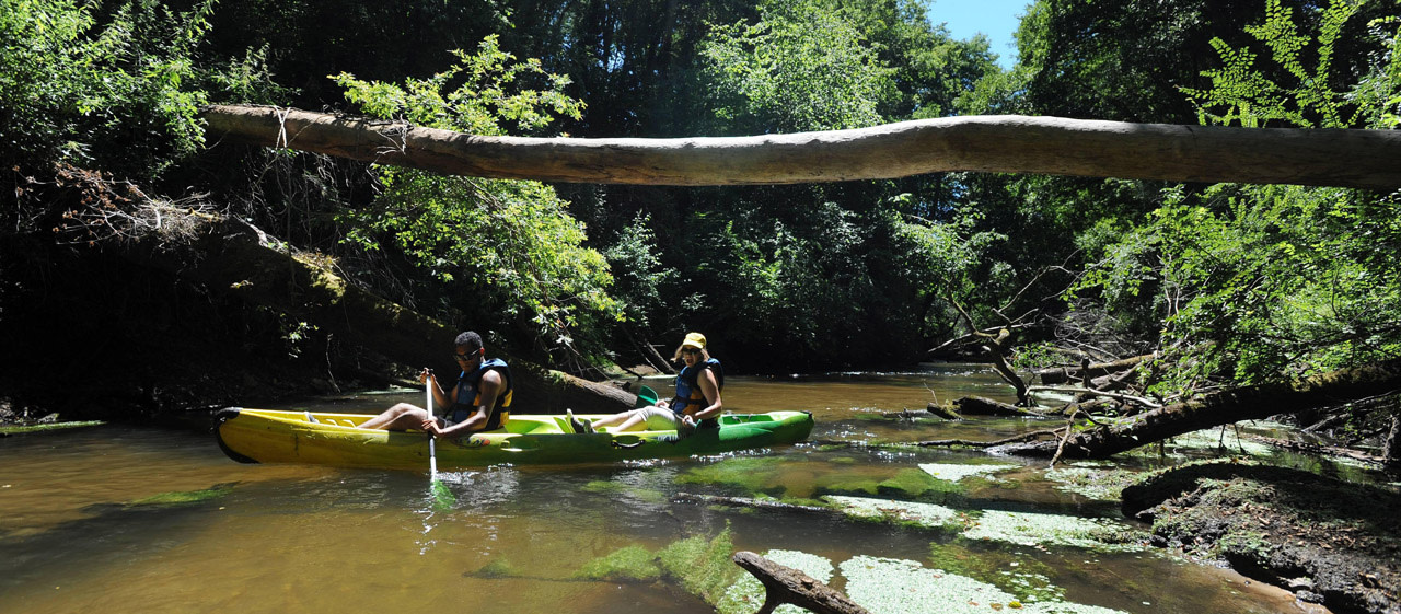 Canoeing in the heart of the Landes