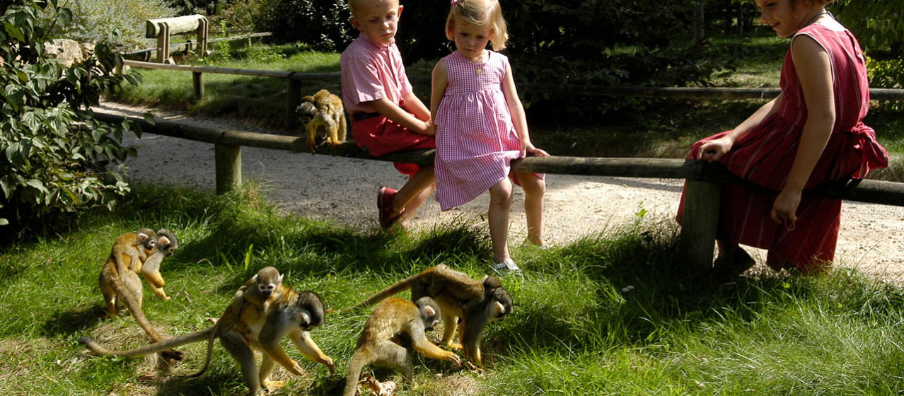 Visit La Vallée des Singes, the 100% natural animal park