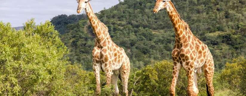 Kruger National Park: Free Day