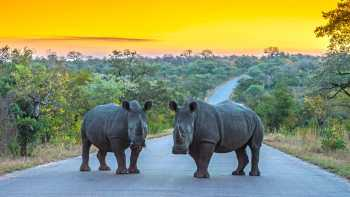 Kruger National Park Region: Free Day