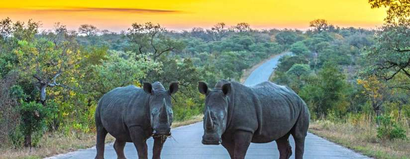 Kruger National Park: Free Day