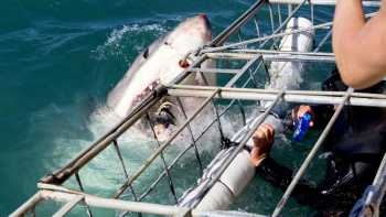 Shark Diving Excursion - Swellendam - Mossel Bay