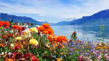 Geneva - Swiss Alps