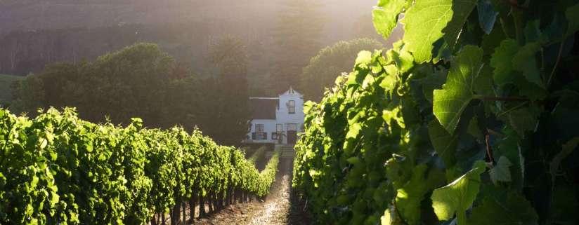 Cape Winelands - Cape Town