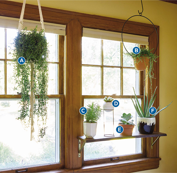 Decorating with houseplants west facing window: Plants dry out more quickly in direct sun. Thankfully succulents and cacti prefer their soil to dry out between waterings.