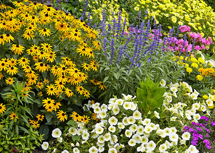 Design A Garden To Attract Pollinators Plant Diversity: